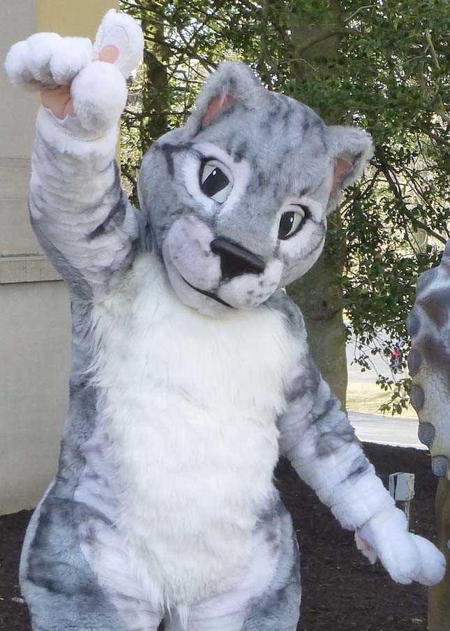 gray tabby mascot costume