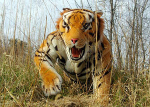 realistic tiger puppet