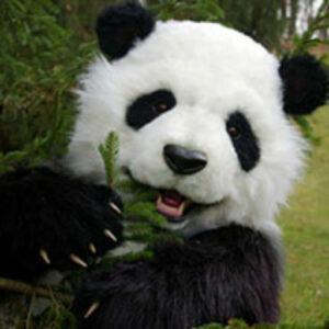 realistic panda costume for hire
