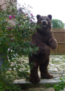 realistic brown bear costume for hire